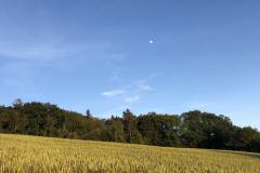 Kornfeld mit Mond