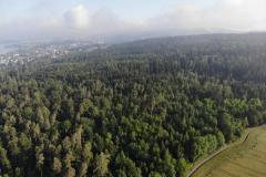 Blick über den Zollikerwald nach Norden, oberhalb des Rumensees