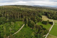 Wald und Allmend