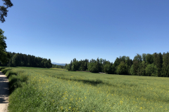 Rüterwis, Juni 2019
