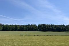 Rüterwies