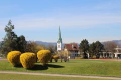Forsythien und Kirche