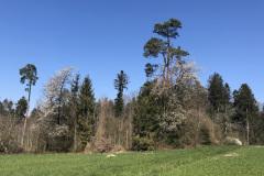 Waldrand, April 2020