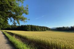 Rüterwis, 5. Juli 2021