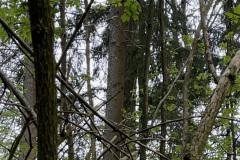 Waldohreule getarnt