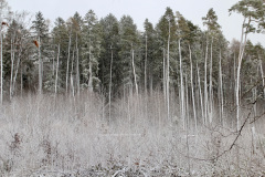 Winterwald im Februar 2020
