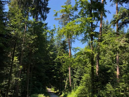Wald und Natur
